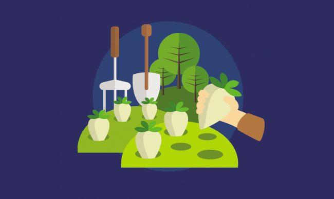 Как вырастить пряные травы